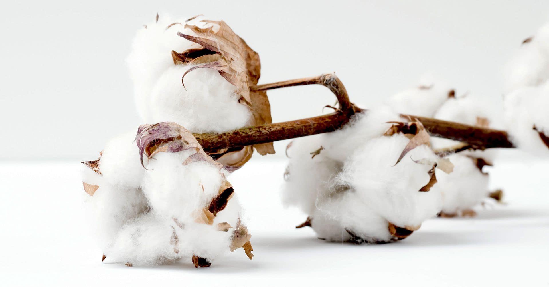 planta de algodón telas Bogotá